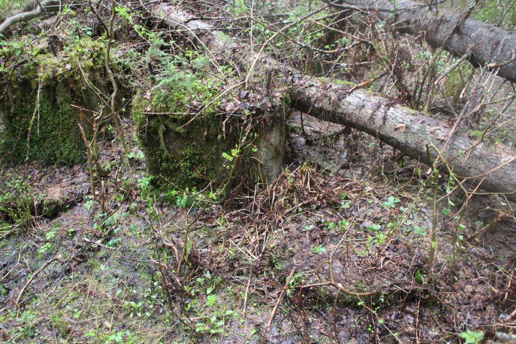 Верхняя плотина на р. Вааранйоки