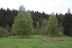 Порог Уотила, Куркиеки